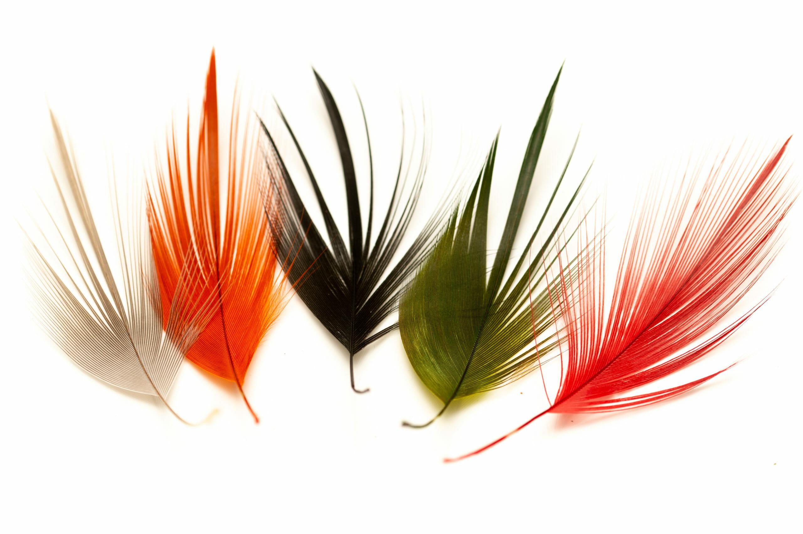 bunte med hägerfjädrar i olika färger